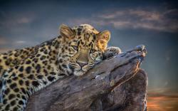 Fantastic Leopard Wallpaper