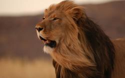 Fantastic Lion Wallpaper