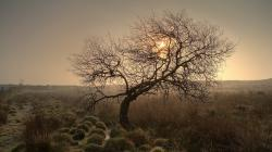 Fantastic Twisted Tree In A Misty Field Hd Desktop Background HD wallpapers