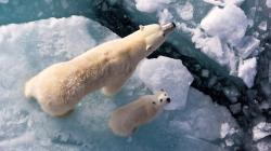 Fantastic Polar Bear Wallpaper
