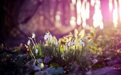 Fantastic Spring Forest Wallpaper