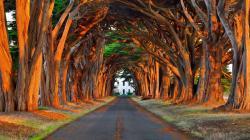 Fantastic Tree Lined Driveway HD Desktop Background wallpaper