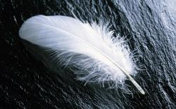 Desktop hd peacock feather wallpaper house