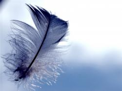 Desktop hd peacock feathers pictures