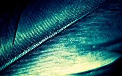 Green Feathers HD Wallpapers