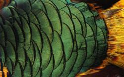 Parot Feathers