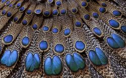 feathers beautiful image
