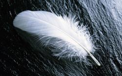 White Feather White Feather 351