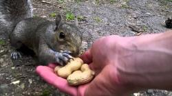 Hand Feeding Squirrels (Climbing all over me!)