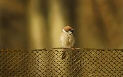 Fence Bird Sparrow