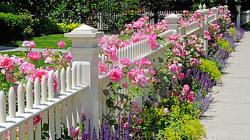 Widescreen resolutions (16:10): 1280x800 1440x900 1680x1050 1920x1200. Normal resolutions: 1024x768 1280x1024. Wallpaper Tags: white fence cute flowers