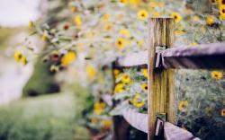 Fence Flowers Yellow Macro Nature