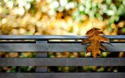 Fence Leaf Yellow Autumn Bokeh