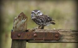 Cartoon Owl Wallpaper Hd: Rust Metal Fence Owl Hd Wallpaper Zoomwalls 1920x1200px