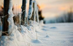 Winter Evening Snow Fence