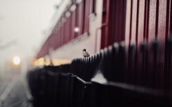 Fence The Sparrow Train Photo HD Wallpaper