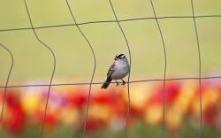 Fence Wire Bird