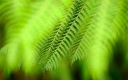 HD Wallpaper | Background ID:408432. 2560x1600 Earth Fern