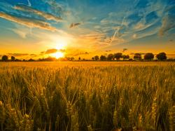 In the Alter Rebbe's maamer on this week's Torah portion, he introduces his famous allegory about the king in the field. The narrative symbolizes the ...