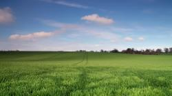 Young green wheat field free wallpaper in free desktop backgrounds category: Fields-backgrounds.