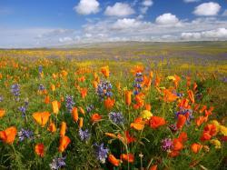 Flower Field; Flower Field ...
