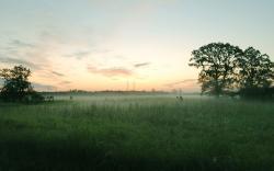 Field Mist Wallpaper 16092