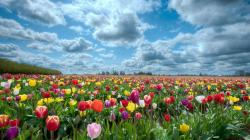 hd-wallpapers-field-of-flowers-background-1920×1080-wallpaper