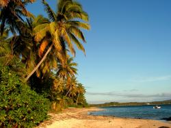 Coconut palms line the beaches of Fiji