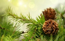 Fir Tree HD 14638