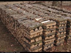 Firewood pile, Massachusetts, USA