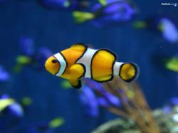 ... Image Fish #06 Image