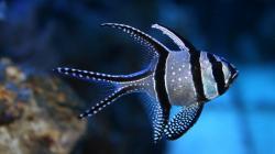 fish 1 fish 2 ...