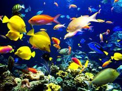 Original Size: Click Here. Underwater Fish Background Description : Download Underwater ...