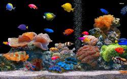Fish Wallpaper 430 Desktop Nature