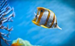... Fish Wallpaper ...