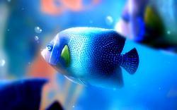 Fish Wallpaper