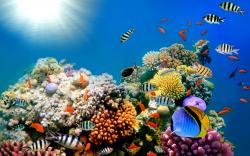 Fish Coral Life Wallpaper