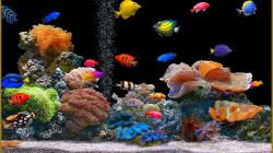 Beautiful Fish Wallpaper