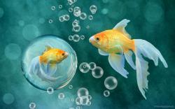 Fish Wallpaper Image Hdwallpapersdownloadcom 1920x1200px