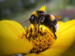 Beautiful Bee In Flower Desktop Images 23113 High Resolution