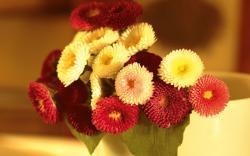 Flower Bokeh Wallpaper 33926 2560x1600 px