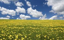 DOWNLOAD WALLPAPER Flowers Field Background - FULL SIZE ...