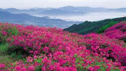 Related Wallpapers. Flower Field ...