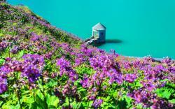 Flower hill lake