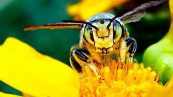 3840x2160 Wallpaper bee, mustache, flower, insect, light
