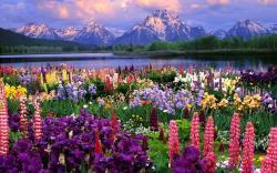Flower Landscape · Download ...
