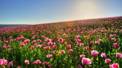Flower Landscape 29017 1920x1080 px