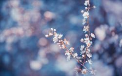 Flower Macro Backgrounds 14182