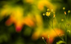 ... Flower Macro Wallpaper ...