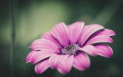 Flower Petal Macro